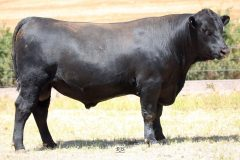 Lot 6 - Maryvale Qwerty Q96