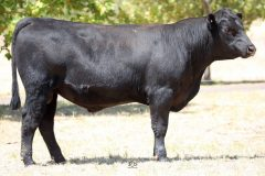Lot 11 - Maryvale Ravi R101
