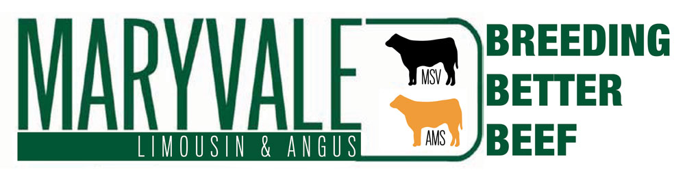 Maryvale Stock : Limousin and Angus